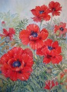Scarlett Poppies